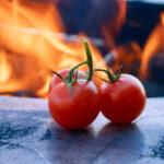 Tomaten auf der Planchaplatte
